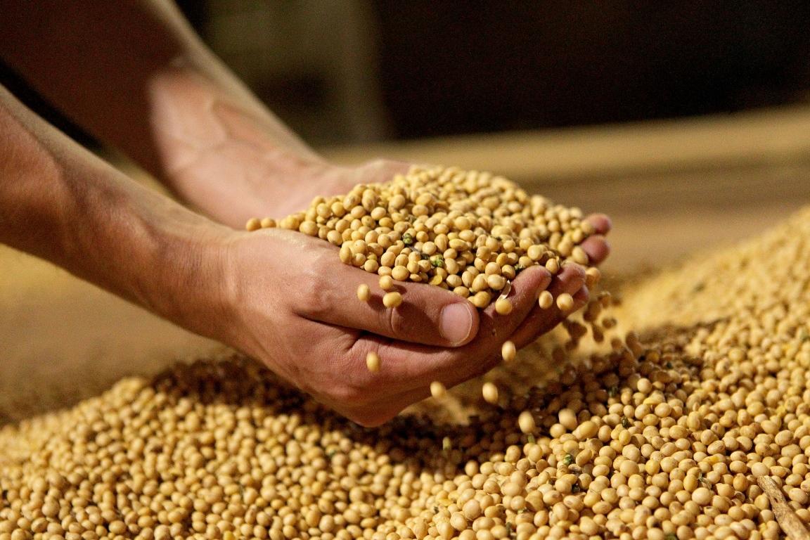 Soja orgânica é economicamente viável, mas enfrenta desconfiança do consumidor