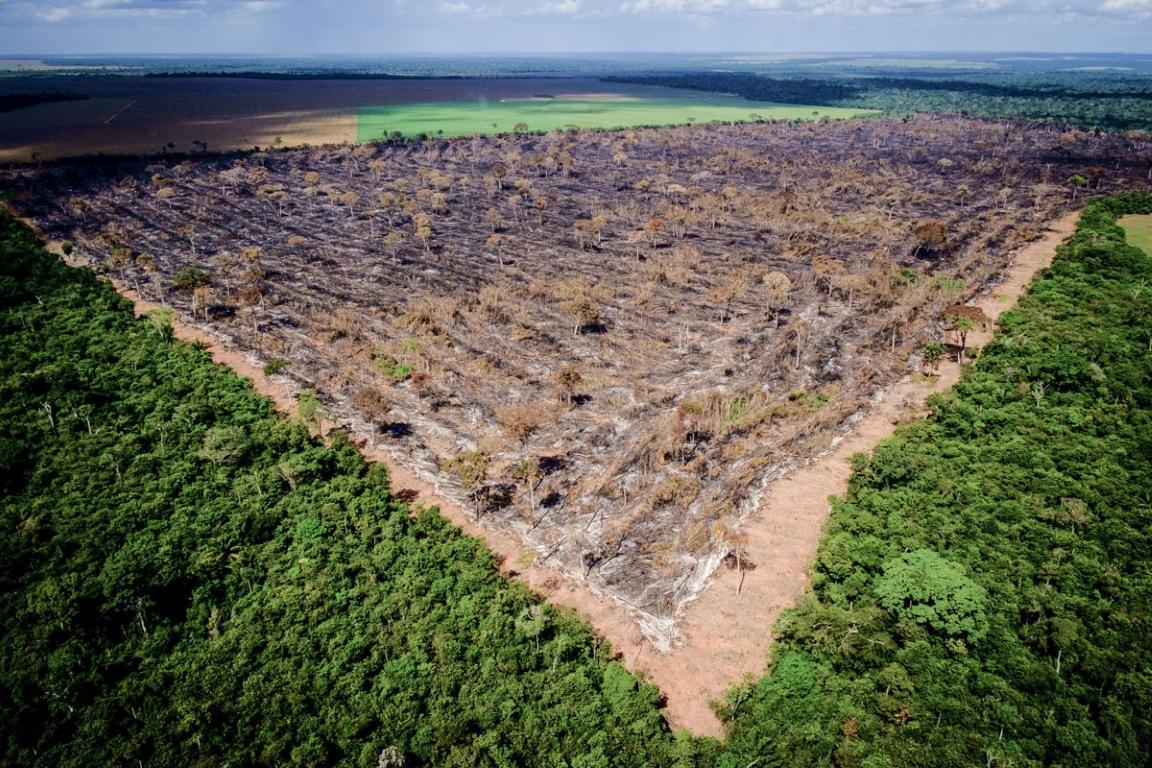 Fundo Amazônia é o único recurso no Brasil para custeio de combate ao desmatamento, diz ISA