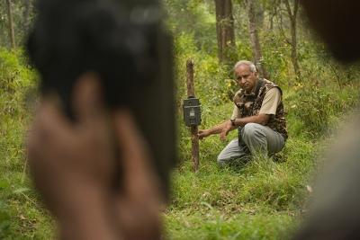 A história de Ullas Karanth e a recuperação do tigre indiano