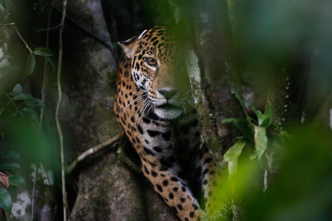 Galeria: No dia da Amazônia, fotógrafos celebram a maior floresta tropical do mundo