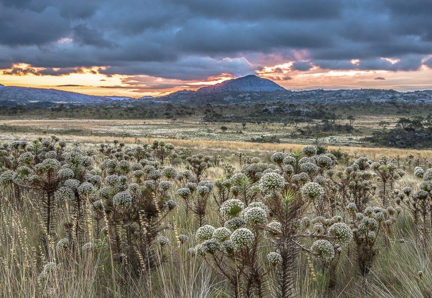 O cerrado do Parque Nacional das Emas. Foto: André Dib.