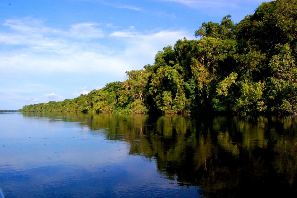 Diversidade de árvores é 3 vezes maior do que se pensava nas áreas úmidas da Amazônia