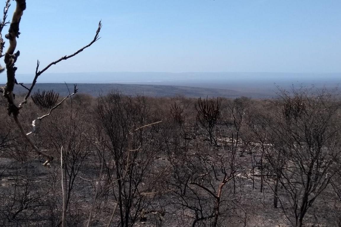 Incêndio no Parque Boqueirão da Onça consumiu 3300 hectares de vegetação