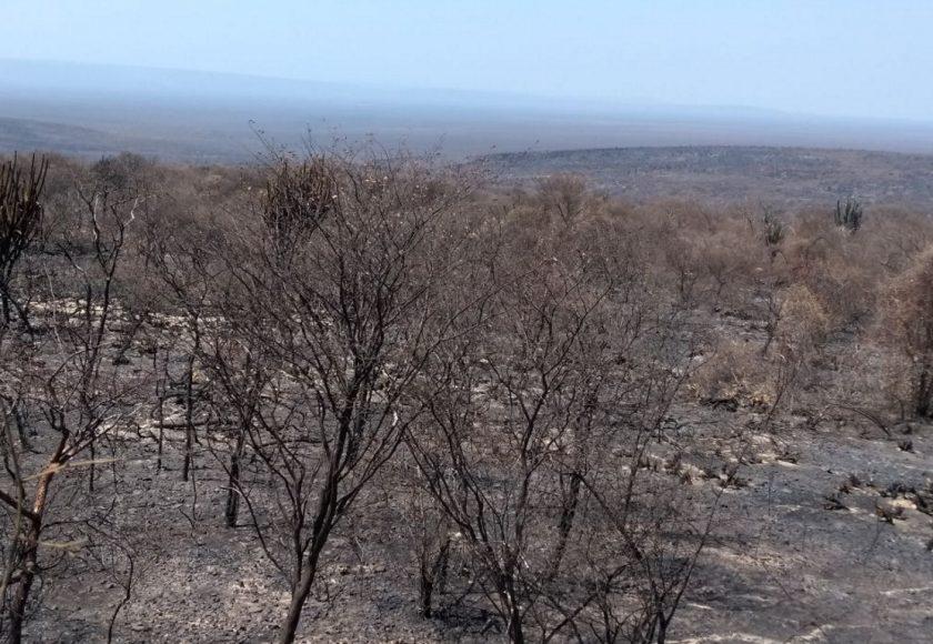 3300 hectares foram queimados. Foto: Divulgação