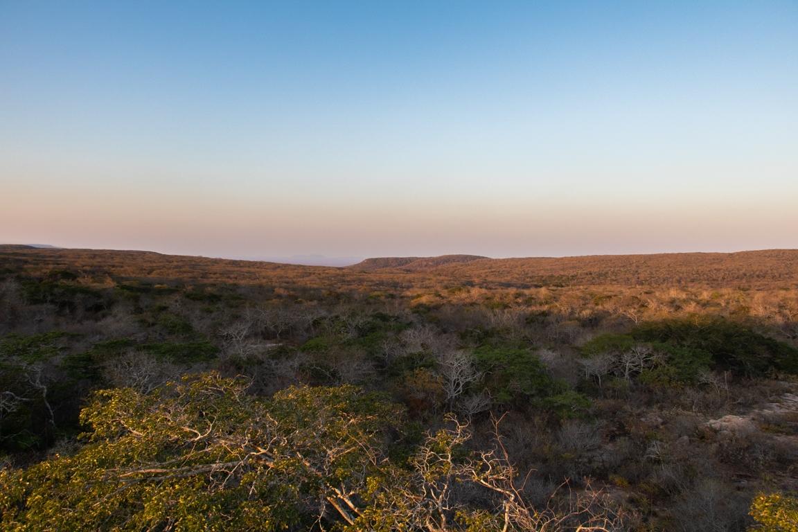 As verdadeiras – e muitas – cores da Caatinga - ((o))eco