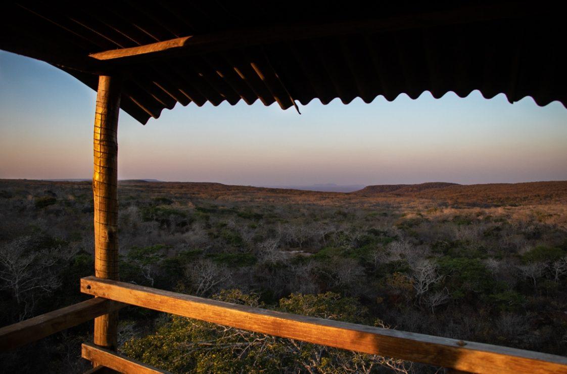 Visual panorâmico a partir da torre de observação da reserva. Foto: Duda Menegassi.