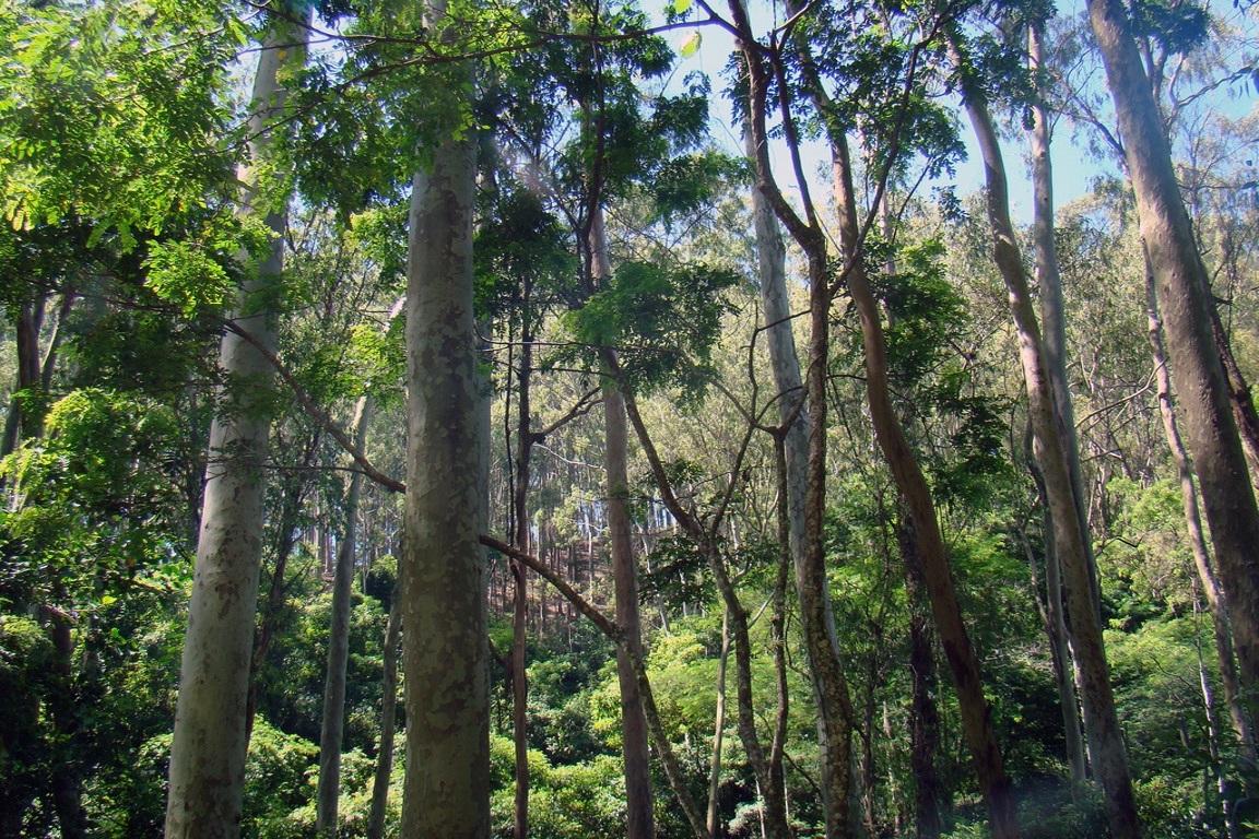 Image result for florestas secundárias