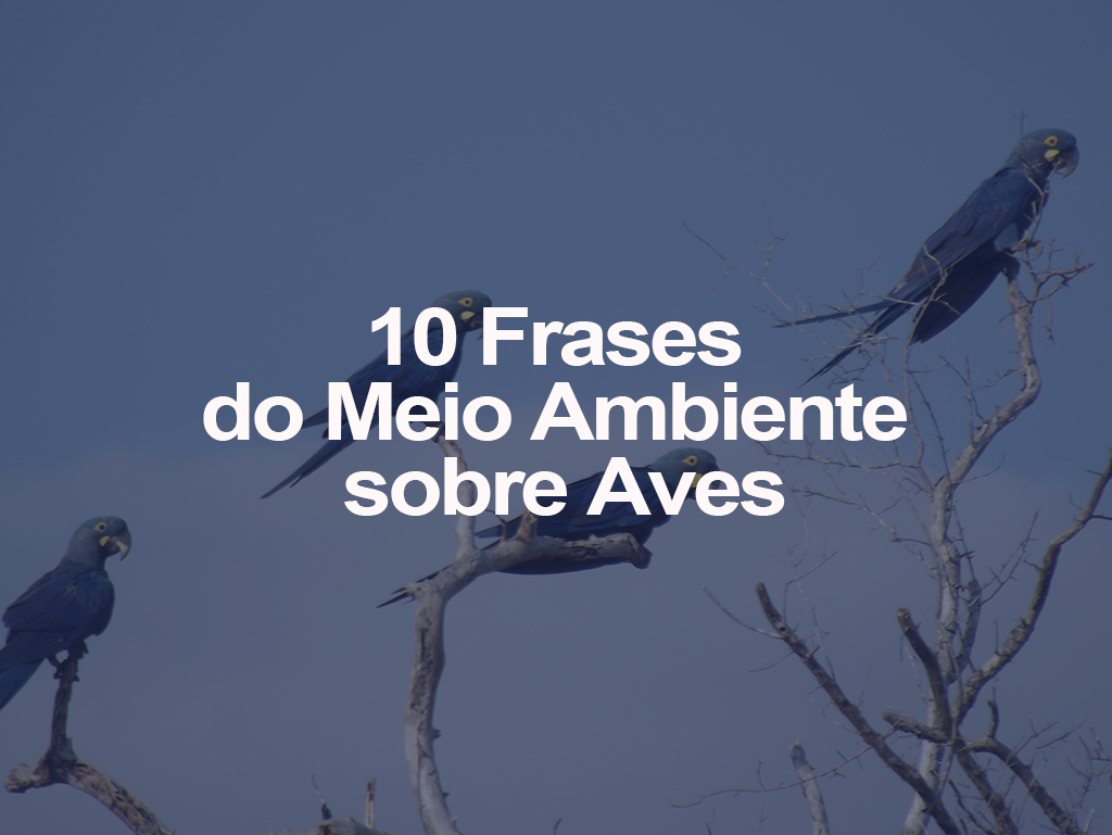 10 Frases Do Meio Ambiente Sobre Aves Oeco