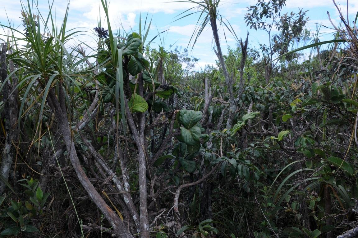 Fundo Amazônia abre linha de apoio para financiar zoneamento ecológico