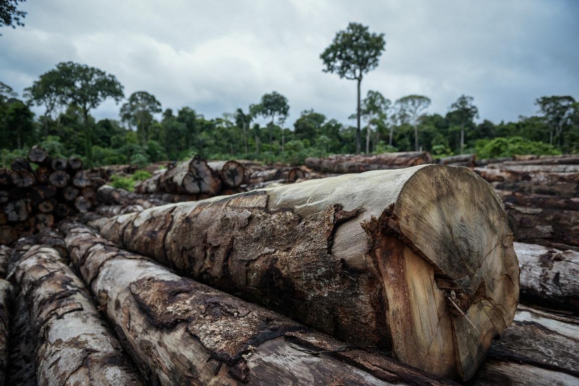 Alerta de desmatamento na Amazônia cresce 34% em dezembro