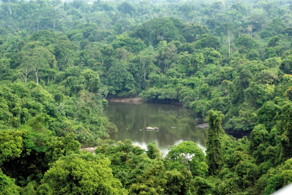 Fazendeiro terá que pagar R$ 1 mi por desmatar Estação Ecológica no Pará