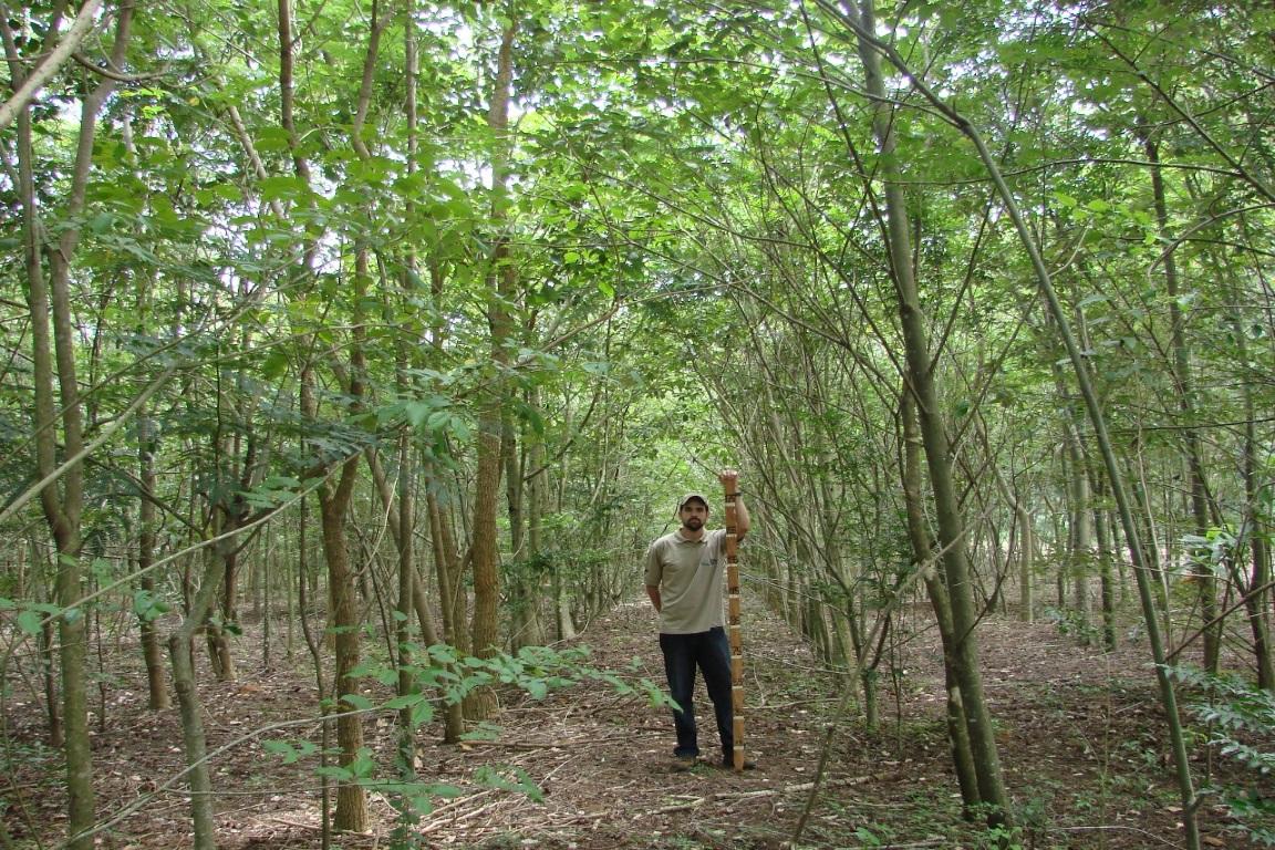 Matas regeneradas recuperam 80% das espécies arbóreas, diz estudo internacional