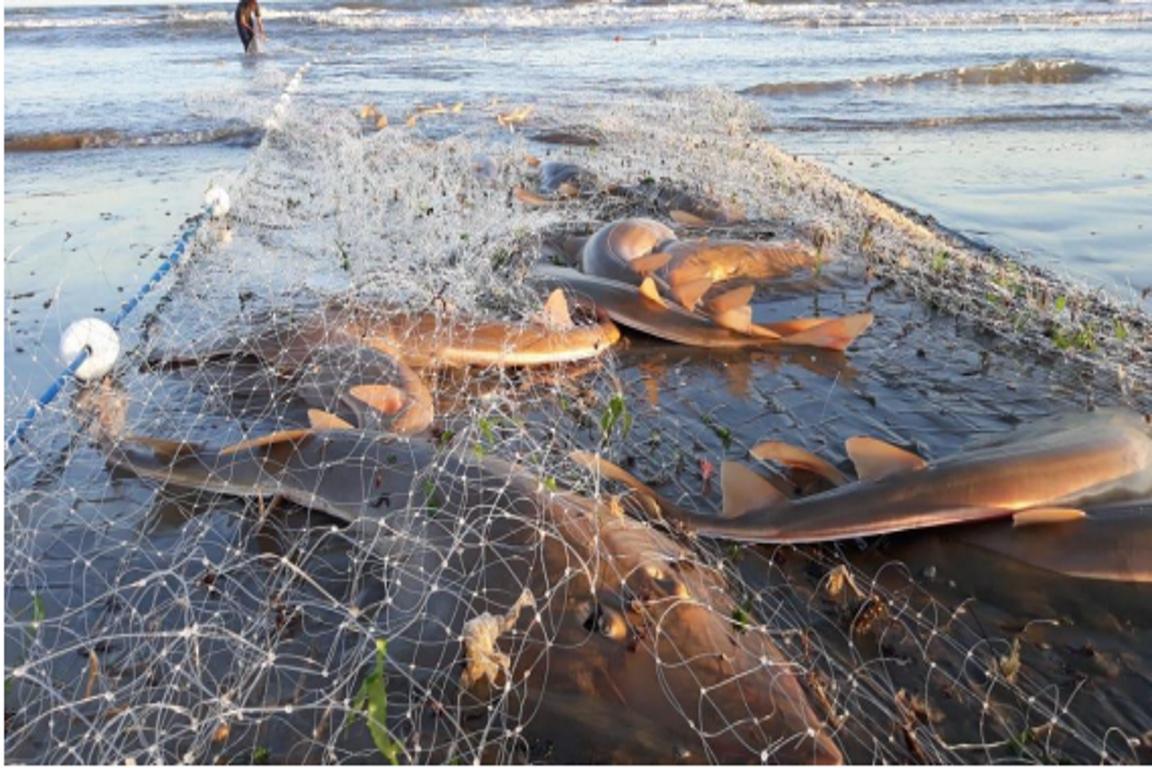 Pescadores irão responder por captura ilegal de espécies protegidas