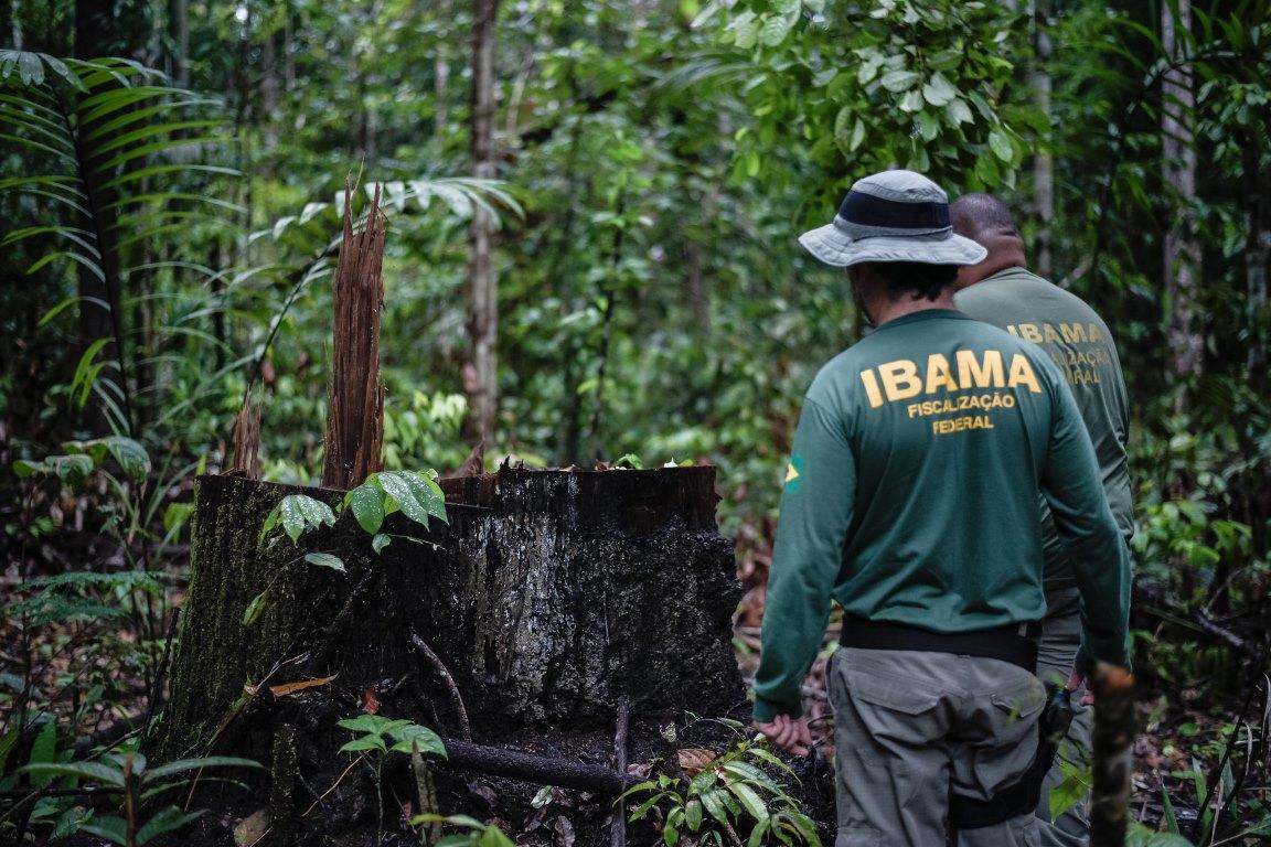 Governo institui anistia prévia a criminosos ambientais