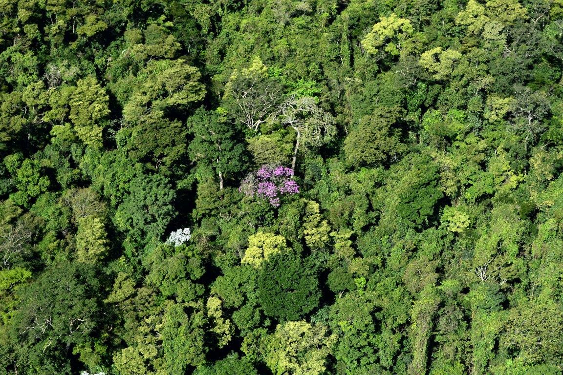 Desmatamento na Mata Atlântica é o menor já registrado