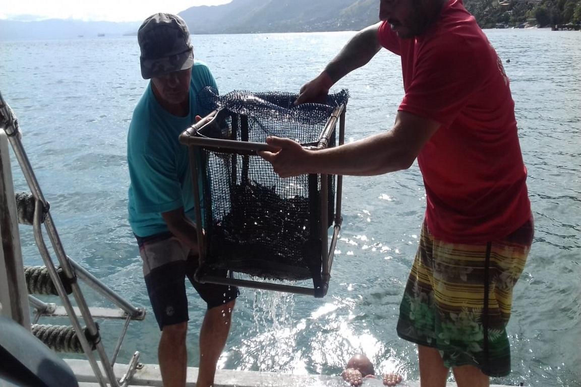 2 mil garoupas são soltas em Santuário Ecológico Marinho de Ilhabela