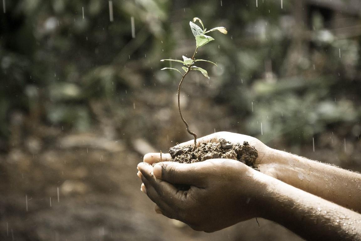 Biodiversidade, a nossa única opção
