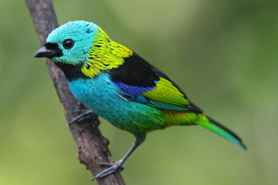 """Aves fora de sua """"zona de conforto"""" são mais vulneráveis ao desmatamento"""