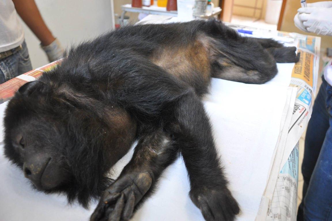 Minas fecha centro de triagem de animais após corte no orçamento