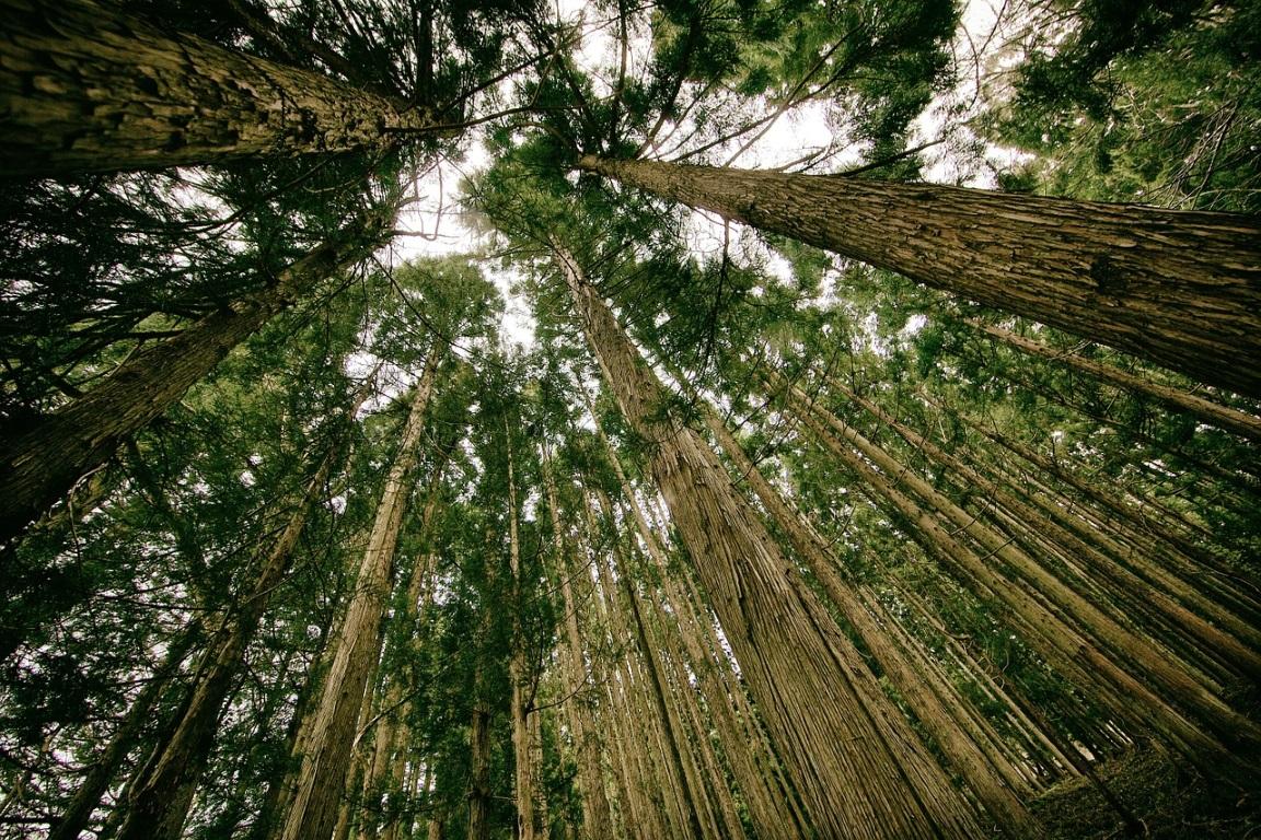 O papel dos jovens frente a escalada da destruição da natureza