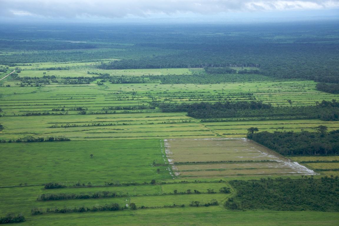 Faltam assessores na área ambiental do governo Bolsonaro
