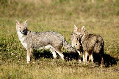 Áreas protegidas da América Latina se preparam para um novo acordo global pela natureza