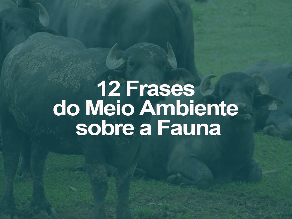 12 Frases de Meio Ambiente sobre a Fauna