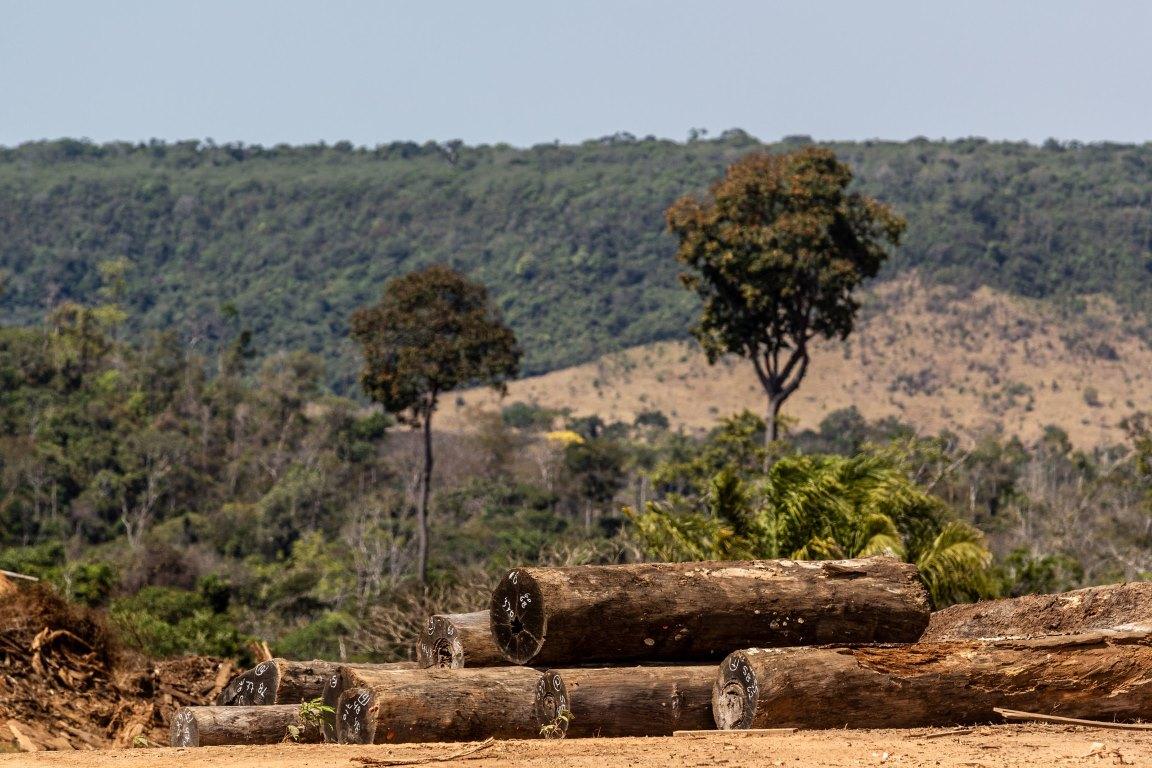 Imazon: desmatamento dispara em julho e confirma tendência de alta no ano