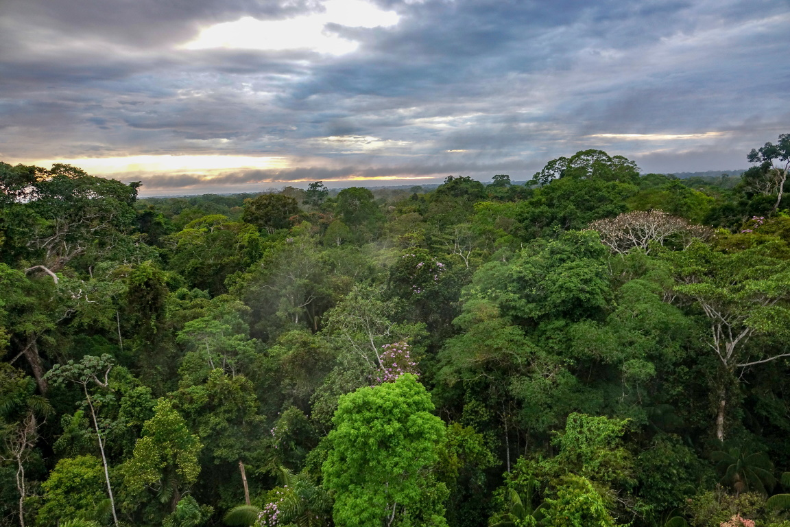 Populações de animais em florestas diminuíram em mais da metade, diz estudo