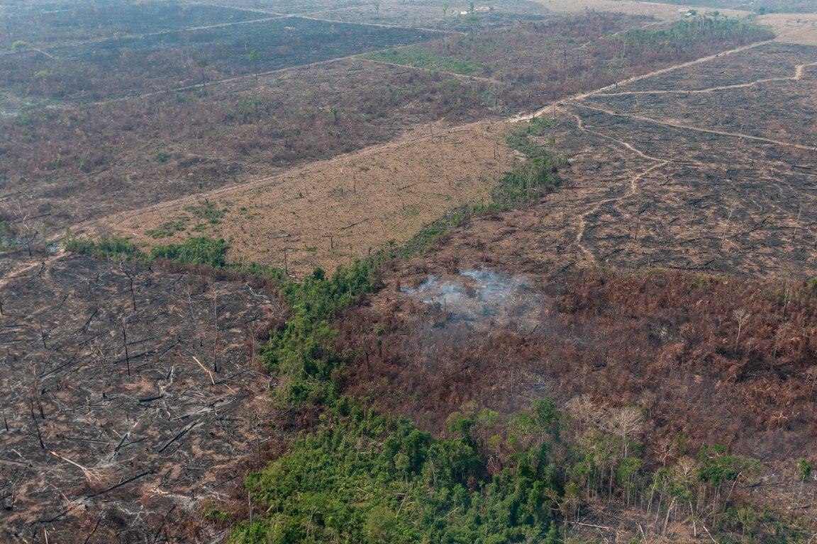 Especialistas contradizem declaração de ministra da Agricultura sobre regeneração da Amazônia após queimadas