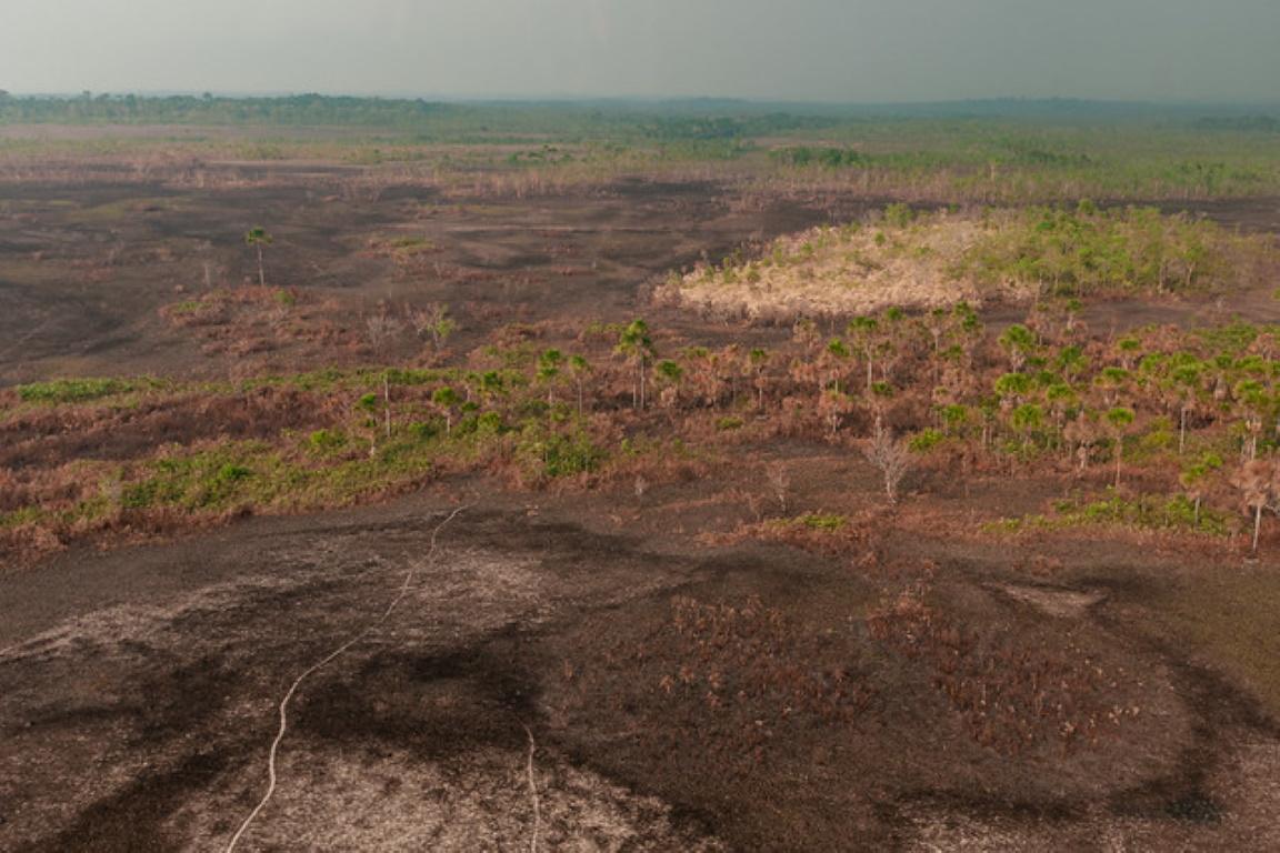 Câmara quer transformar a gestão do Fundo Amazônia em lei
