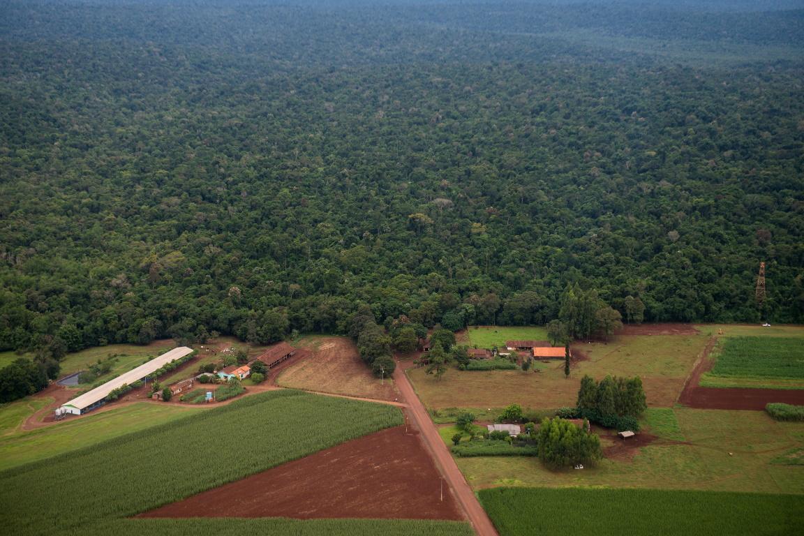 Houve regeneração da vegetação na estrada que corta o Parque Nacional do Iguaçu, diz MPF