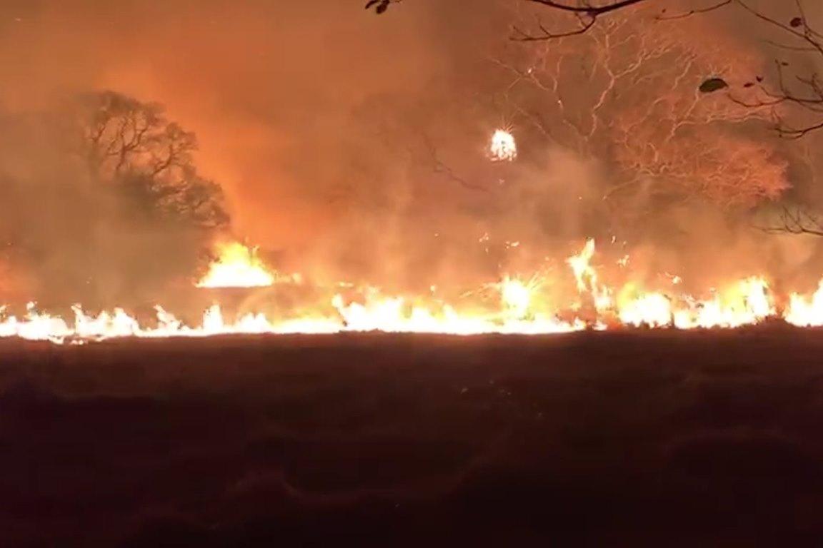 Incêndio no Pantanal atinge 61% do Refúgio Ecológico Caiman, santuário das araras azuis