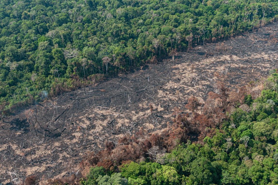 ⅓ das áreas queimadas este ano foi derrubado ilegalmente no passado, diz MPF