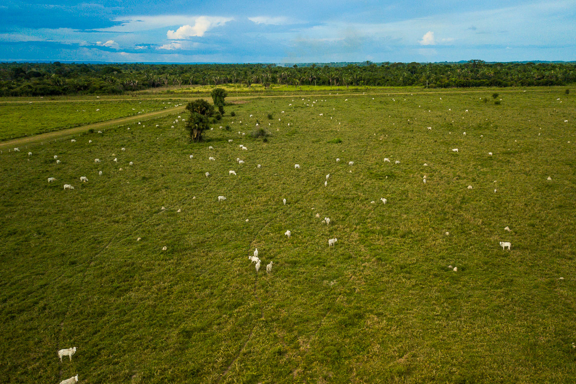 Tocantins fica para trás na adoção de principal controle do boi de desmatamento