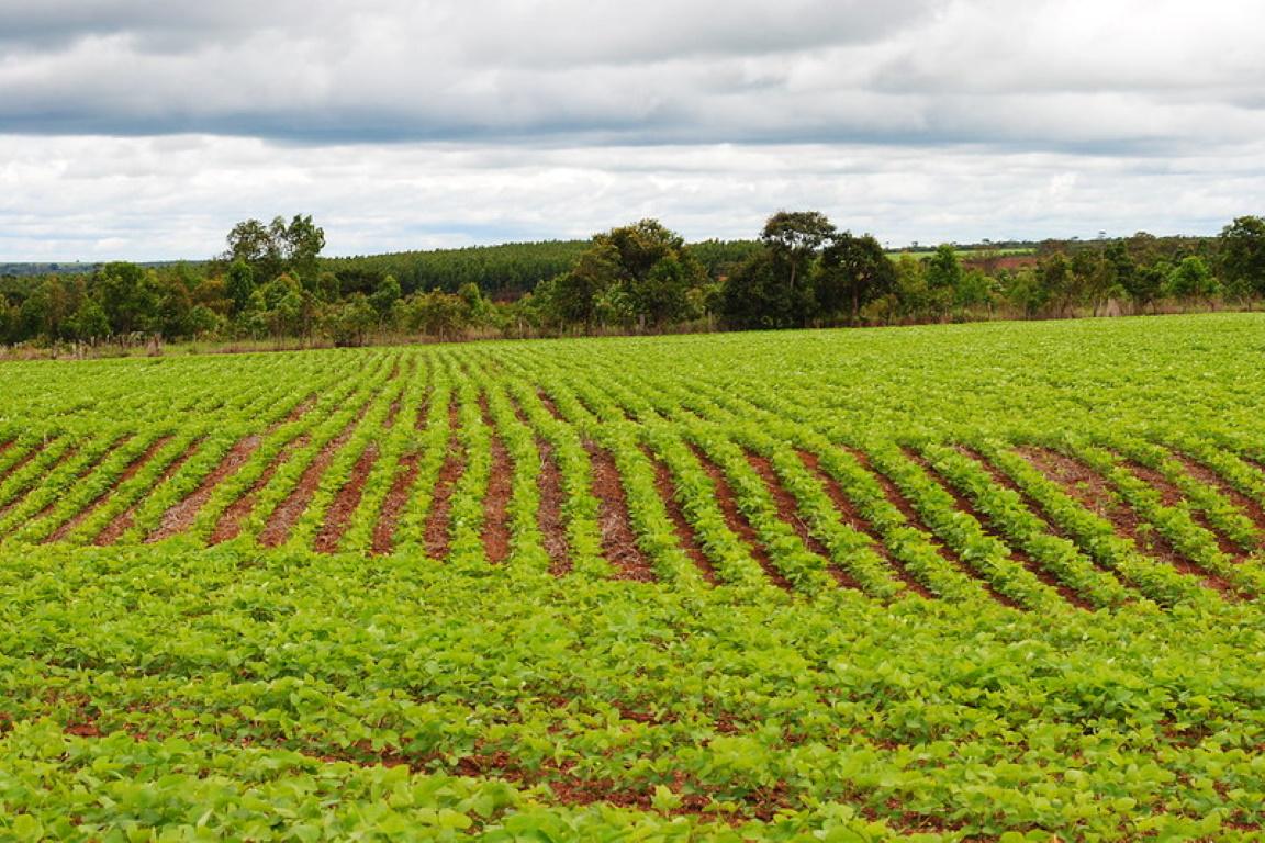 Presidente do Ibama libera terras indígenas embargadas em Mato Grosso