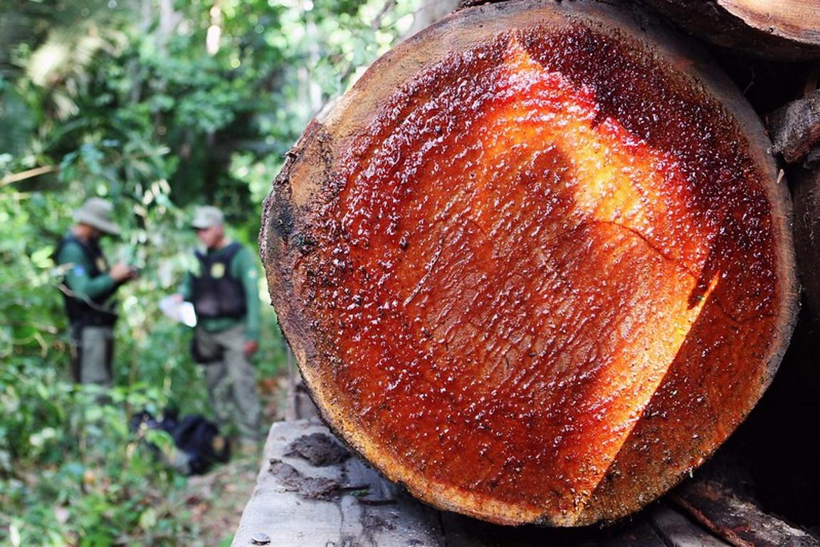 Ibama lança livro sobre produção madeireira de espécies nativas