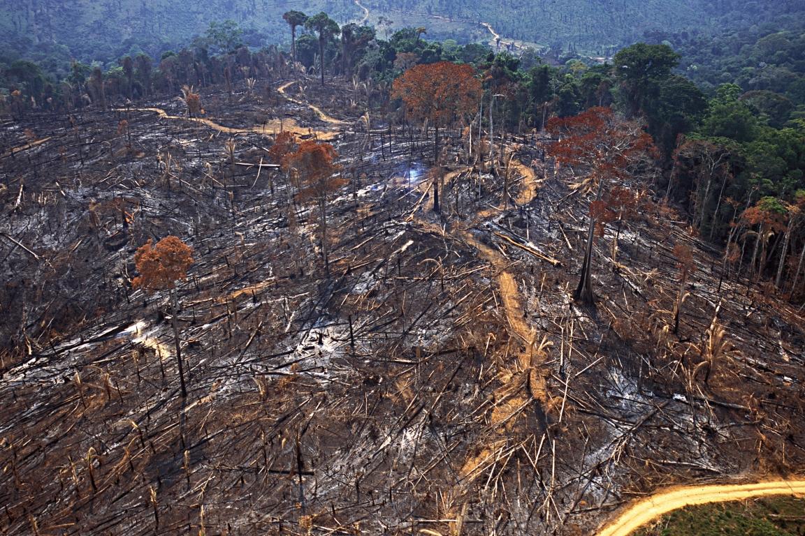 Retrospectiva: Aumento do desmatamento fez Amazônia pegar fogo em 2019