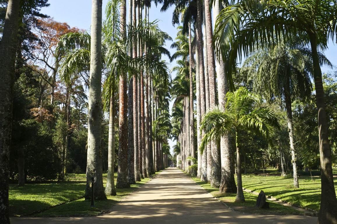 Jardim Botânico do Rio de Janeiro reabrirá a partir desta quinta-feira -  ((o))eco