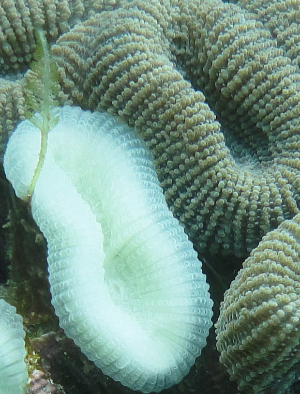 Ameaça aos recifes de corais brasileiros