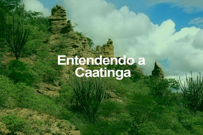 Entendendo a Caatinga