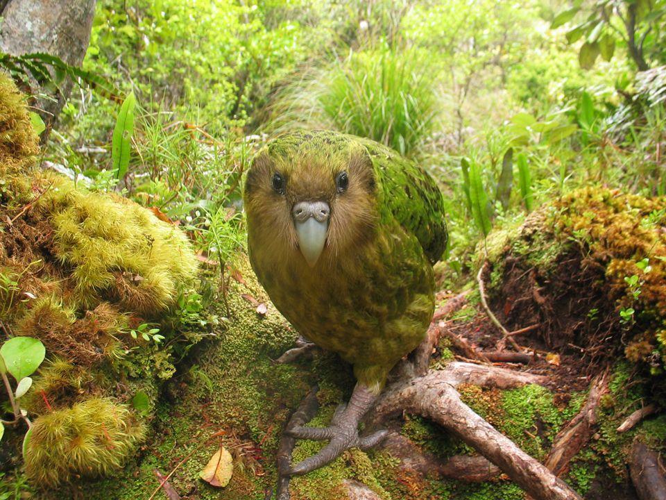 Fotos: as aves mais raras do mundo