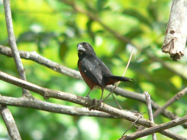 Muito Novas regras para criadores de pássaros | ((o))eco BW35
