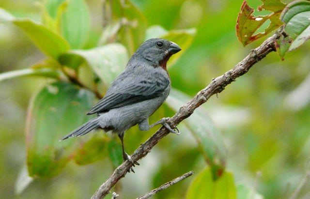 Extremamente Novas regras para criadores de pássaros | ((o))eco HW85