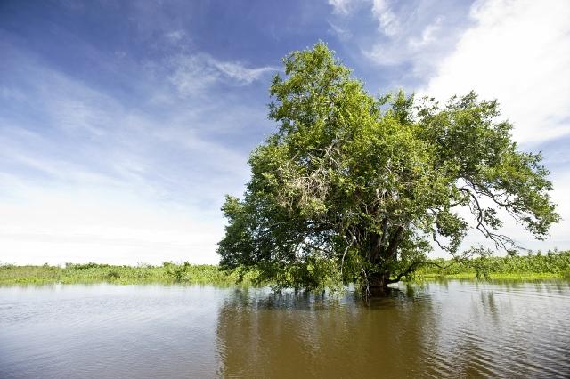 Estudo mapeia as principais ameaças ao Pantanal