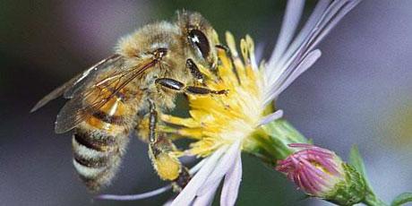 Campanha mundial para a proteção das abelhas.