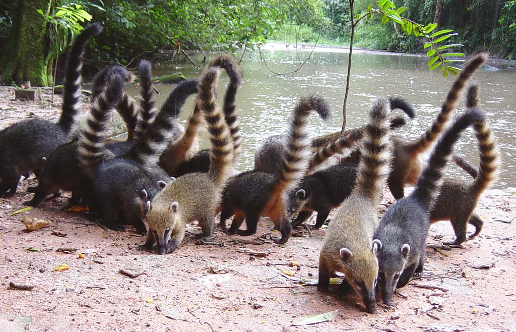 Fauna abundante, conservação às avessas