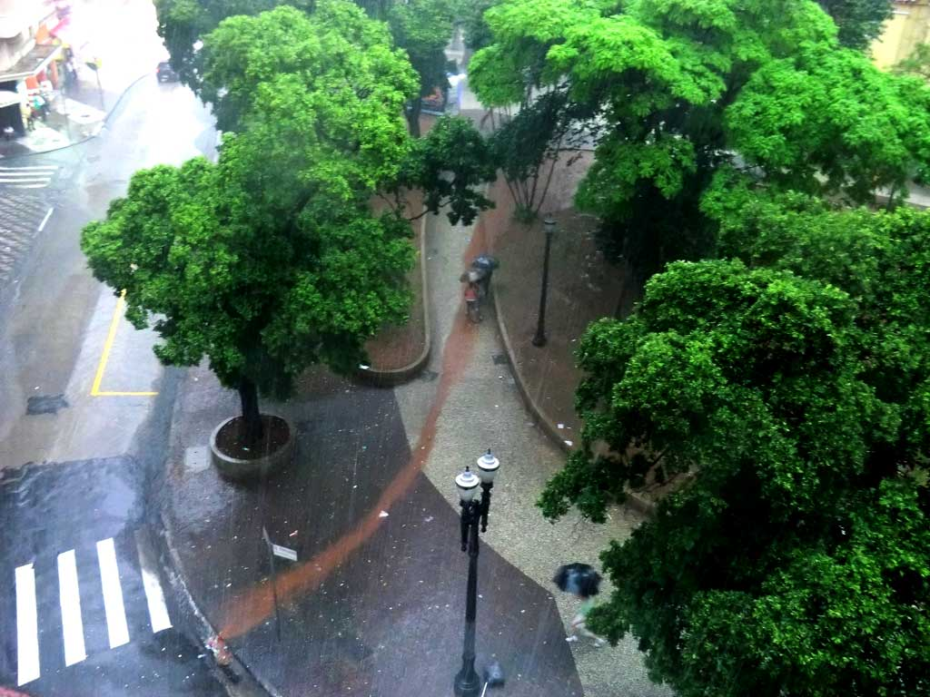 São Paulo, onde as árvores são consideradas lixo
