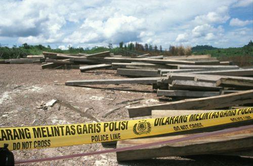 Produção de madeira ilegal diminui em 10 anos