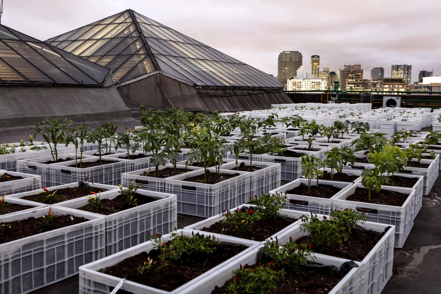 Hortas urbanas: uma revolução gentil e orgânica